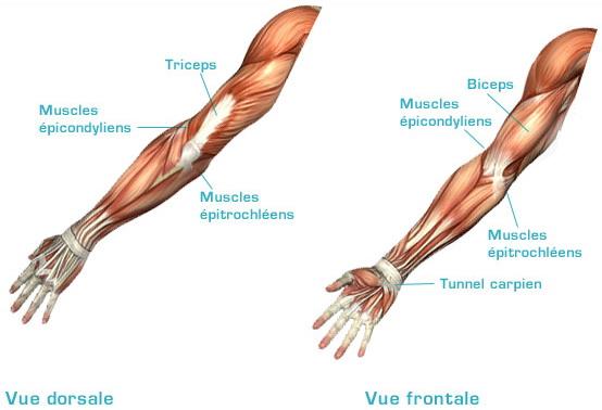 Sant ne baissez pas les bras alegria club for Anatomie du meuble